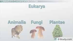 carolus linnaeus classification taxonomy u0026 contributions to