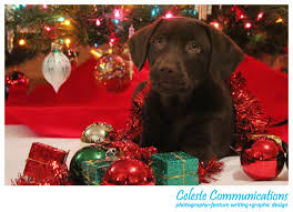5 non profits to leave out of your holiday donations celeste harned