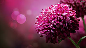 wholesale flowers online wholesale flowers online wallpaper