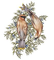 save the songbirds plant these shrubs and bushes wsj