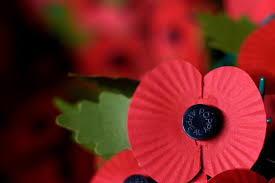 remembrance poppy twitter profile