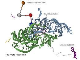 in silico evolution of a proto ribosome
