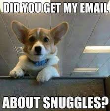 Snuggle Meme - august 5th is work like a dog day or snuggle like a dog day
