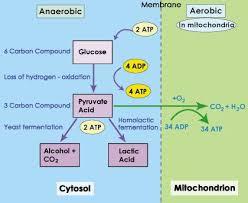 119 best microbiology images on pinterest ap biology molecular
