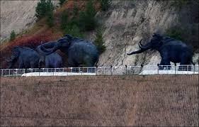 woolly mammoths living siberia u0027within decade u0027