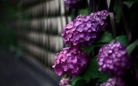 Beautiful Flowers Beautiful Flowers Road Photo 7003720