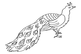 exiting uncolored peacock tattoo design tattooimages biz