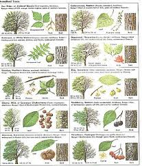 how to identify tree leaves identify tree seeds on imgfave