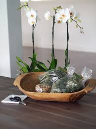 best 25 orchid pot ideas on pinterest orchids orchids garden