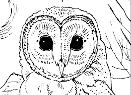 owl colotring pages