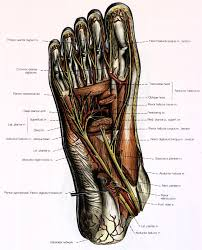 Foot Surface Anatomy Figures And Their Captions In Anatomy