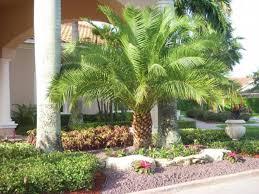 garden ideas home florida landscape ideas create a tropical