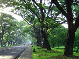 image of the University Avenue in Diliman campus, Quezon City