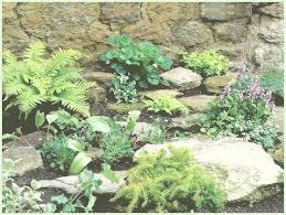 giardini rocciosi in ombra buone piante giardino roccioso buoni fiori per ombra saporous