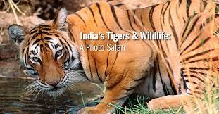Tennessee wildlife tours images India wildlife tour india safaris natural habitat jpg