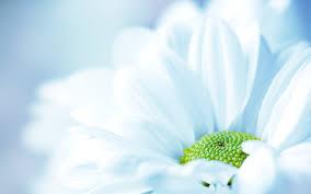 flower wallpaper 2 8k desktop wallpaper