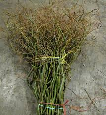 Curly Willow Branches Forest Grove Wreaths And Cut Flowers Oregon Roses