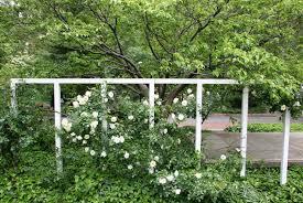 rose trellis u0026 dogwood tree photo hubert steed photos at pbase com