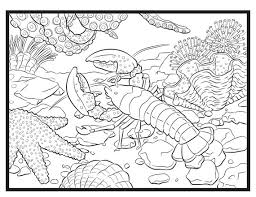 lobster single coloring page coloring pages pinterest