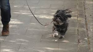 Tierarzt Salzgitter Bad Dao Tha Klangcodes Hund Otto Wird