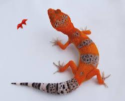 halloween mask leopard gecko bold and bright geckos is a california based leopard gecko breeder