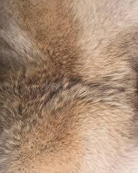 Fox Fur Blanket Coyote Fur Pillows 3663 Jpg