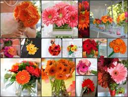 Ideas For Gerbera Flowers Wedding Decoration Ideas With Gerber Daisies Gallery Wedding