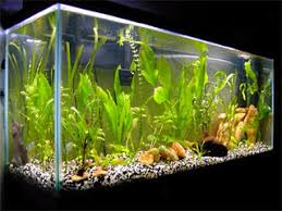 Aquascape Filter Why The Canister Filter Is The Greatest Aquarium Filter Offered