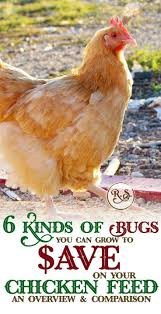 the 25 best best laying hens ideas on pinterest best laying