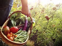 cuisine et jardin jardin giverny magnifique 50 moderne giverny jardin cuisine et