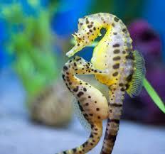 ocean life speakzeasy