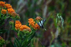 native plants missouri the benefits of native plants wildcat glades audubon center