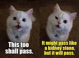 Kidney Stones Meme - lolcats kidney stone lol at funny cat memes funny cat