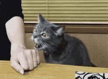 Sneaky Cat Meme - sneaky cat meme gifs tenor