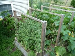 Cucumber Spacing On Trellis Backyard Farm Recap The Morgan Demers Blog