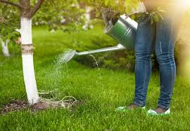 pouring water of watering can on tree at garden stock