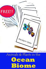 free ocean animals u0026 plants cards preschool powol packets