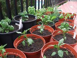 potted vegetable garden ideas christmas ideas best image libraries