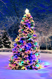 24 best christmas trees images on pinterest decorated christmas