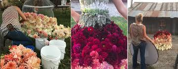 floral design american flowers week