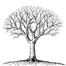 white tree free black and white tree images pictures royalty stock skirt an
