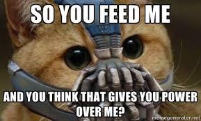 Lawyer Cat Meme - rowland legal