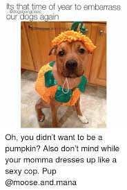 Sexy Dog Meme - its that time of year to embarrass our dogs again oh you didn t want