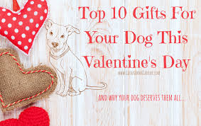 top s day gifts top 10 s day gifts for your dog karma canine
