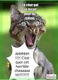 Chat Meme - le chat qui se fesait peur lui m礫me tooniz lolcats r礬alis礬 sur wamiz