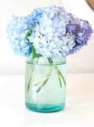 hydrangeas flowers tip to keeping cut hydrangeas looking fresh of family