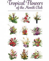 flowers of the month hawaiian flowers of the month with our aloha
