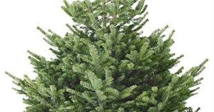 ikea u0027s 5 christmas trees could be the cheapest in manchester