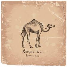 camel art drawing royalty free cliparts vectors and stock
