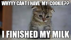 Sad Kitten Meme - sad kitten imgflip